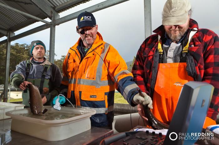Aquaculture photographer Hobart  4