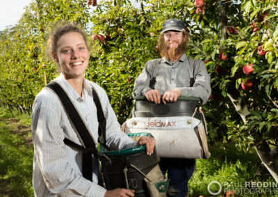 Apple Picking - Calthorpe Orchards AAAWO Pty Ltd Tamar Valley | Orchard Photographer | Paul Redding Photographer