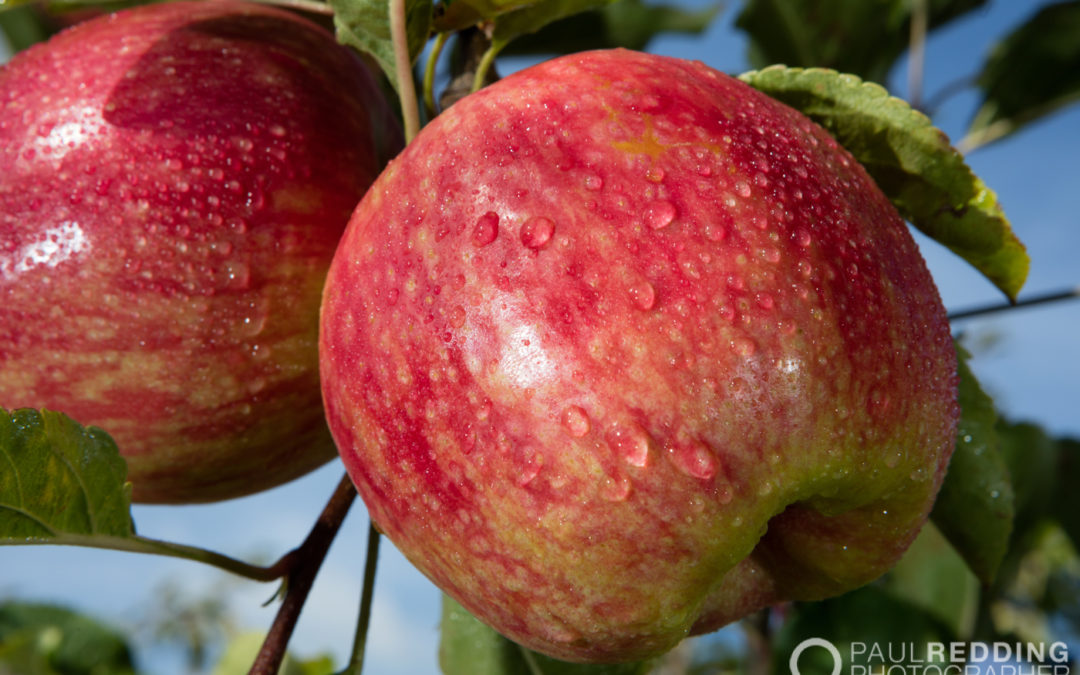 Calthorpe Orchards Tamar Valley