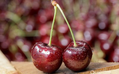 Cherry Production Tasmania | AAAW Group Millers Orchard