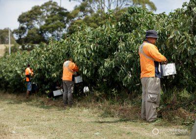 Millers Orchard AAAWG  Hillwood Tasmania