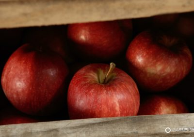apple production Calthorpe Orchards. Sidmouth Tasmania. Hobart Food Photographer - Paul Redding